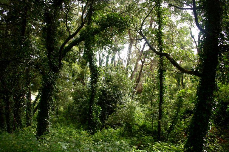 Naturaleza en las Islas Cíes