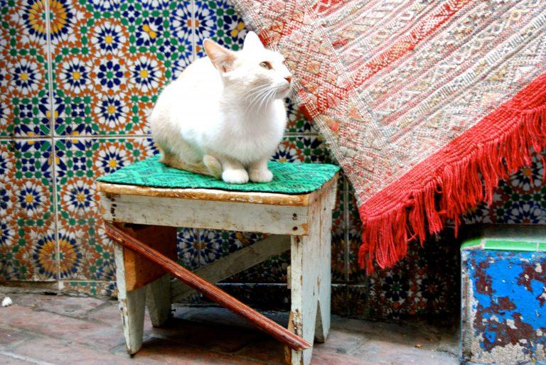 Descubre qué ver y hacer en la medina de Tánger, gatos en Marruecos