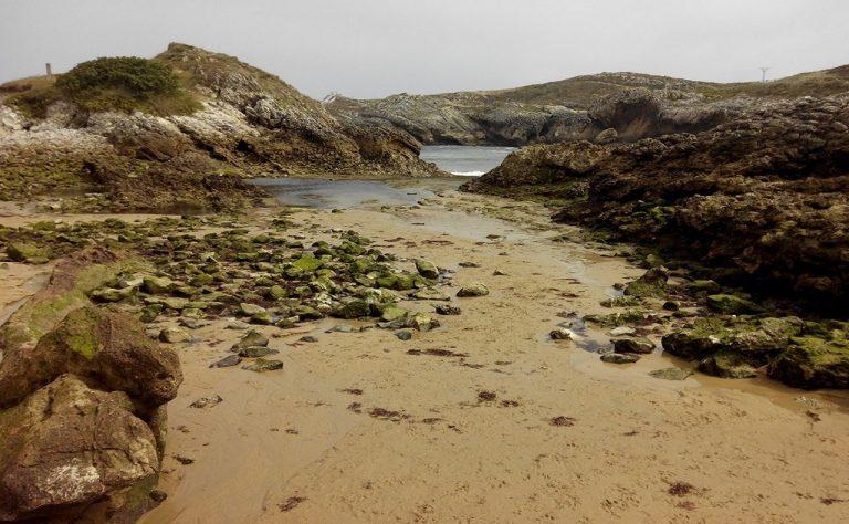 Playa del Arenal para ir con Perros en Cantabria